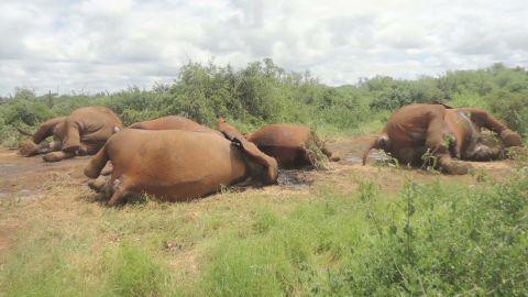 world pkg elbagir elephant poaching_00025407.jpg
