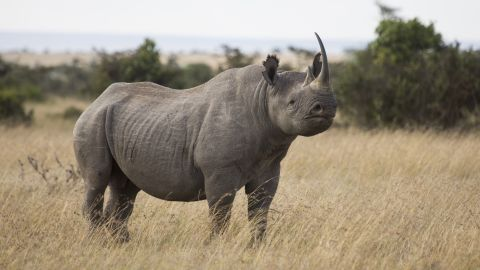 Each year, some 80,000 people visit Ol Pejeta in Kenya's Laikipia District to see its variety of animals, including rhinos , leopards, elephants and lions.