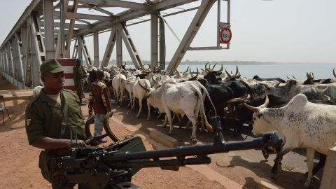 A Malian soldier armed with a machine gun watches a herd of cattle crossing a bridge over the Niger River on January 24. Mali's military offensive against militants controlling the northern half of the country has gathered pace in the past two weeks, with backing from France and other international allies.