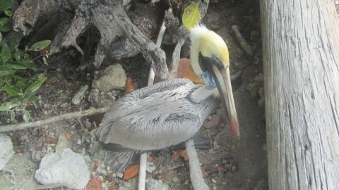 """A rescue official said the birds were """"gasping for breath."""""""