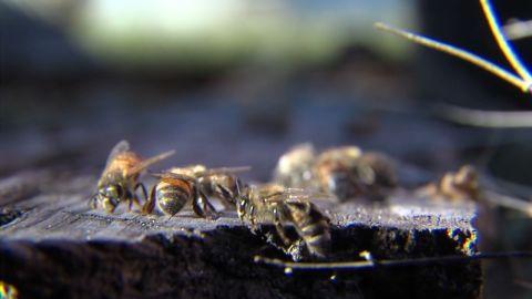 dnt park employee bees_00000122.jpg