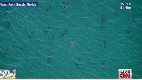 nr brooke sharks_00002325.jpg