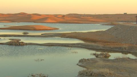 Roberts says Lake Zakher, which emerged from the dunes as a result of wastewater dumping, is one of the UAE's best birdwatching spots.