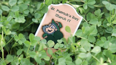 """St. Patrick is said to have used a three-leaf clover to <a href=""""http://www.cnn.com/2012/03/17/world/europe/saint-patrick-study"""">explain the Holy Trinity</a> to the pagans of Ireland. The shamrock has been associated with St. Patrick and Ireland since the mid-5th century."""
