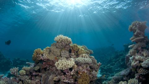 """""""The two worst things in my mind happening to oceans are global warming and ocean acidification,"""" says Ron O'Dor, professor of marine biology at Dalhousie University in Halifax, Canada. """"They're going to have terrible effects on coral reefs. Because of acidification essentially, the coral can't grow and it's going to dissolve away.""""<br />"""