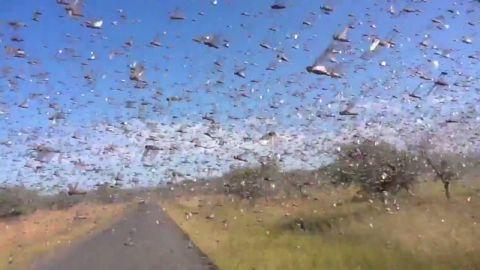 ctw vo locusts swarm madagascar_00002810.jpg