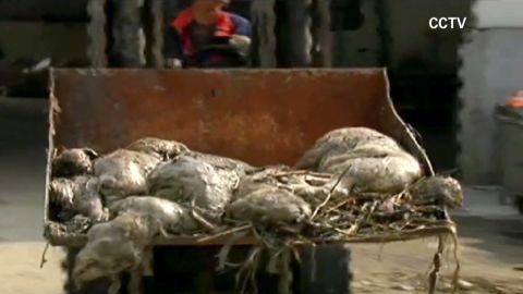 lklv mckenzie china dead ducks_00004224.jpg