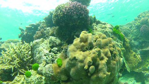 pkg cousteau oceans google street view_00024707.jpg