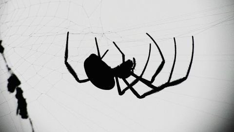 """Spiders are also associated with Halloween imagery, thanks in part to their historic association with <a href=""""http://www.the-wisdom-of-wicca.com/halloween-symbols.html"""" target=""""_blank"""" target=""""_blank"""">ancient religions</a>. The myths surrounding gods and supernatural beings who can predict the future or plot fate are often associated with spinning, thread, weaving and spider webs. But after all, spiders can be scary -- some bite! -- and spooky imagery is part of the Halloween tradition."""