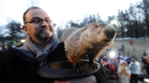 """This is the famous Punxsutawney Phil in Punxsutawney, Pennsylvania. <a href=""""http://www.groundhog.org/groundhog-day/history/"""" target=""""_blank"""" target=""""_blank"""">Groundhog Day</a> is a tradition in the United States and Canada that celebrates a groundhog's emergence from his winter den. Superstition holds that if a groundhog sees his shadow as he leaves the burrow, there will be six more weeks of winter weather. If the groundhog does not see his shadow, you can expect an early spring. Native Americans also have traditions of animals predicting the weather, and<a href=""""http://www.native-languages.org/legends-groundhog.htm"""" target=""""_blank"""" target=""""_blank""""> groundhogs figure prominently in their religions and mythology</a>."""