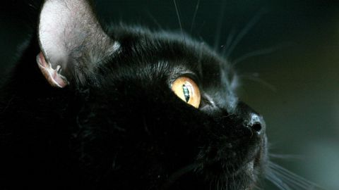 """Magical beasts have been part of Halloween since pre-Christian times. Hysterical<a href=""""http://www.history.com/topics/halloween"""" target=""""_blank"""" target=""""_blank""""> fear of witches (said to turn into cats</a>) in the middle ages linked felines to the holiday."""
