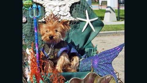 """Meet Nickie, also known as King Neptune. Diane Deeward of Michigan went all out for the Mardi Paws parade in Mandeville, Louisiana, in March for her dogs, Nickie and Melody. The parade's theme was """"Doggone Wet."""""""