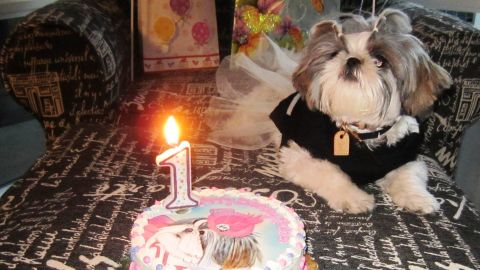 """San Diego resident Shila Hooshmand celebrated Ruffle's first birthday in a big way.  """"It's the closest thing I have to a child thus far,"""" Hooshmand said."""