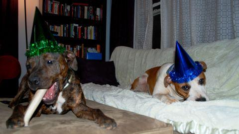 Here, Hand and Troka's dogs, Oscar and Sula, feast on birthday treats.