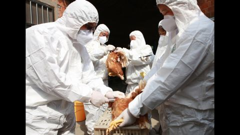 Health workers collect blood samples from chickens at a poultry farm in Taizhou, China, on April 17.