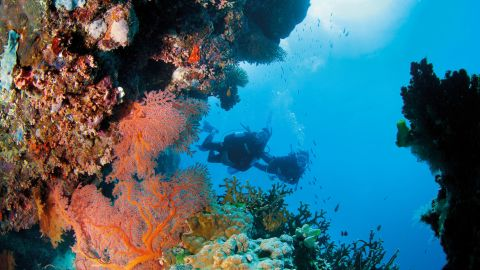 Composed of more than 3,000 individual reefs interspersed with more than 600 topical islands, the world's most extensive coral reef system has been protected since 1981. A 2012 study found that the delicate ecosystem has lost more than half of its coral since 1985 due to a combination of factors including coral bleaching caused by climate change.