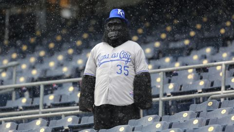 A lone fan watches snow fall during a delay in play between the Tampa Bay Rays and the Kansas City Royals at Kauffman Stadium in Kansas City, Missouri, on Thursday, May 2. The game was postponed because of the weather.