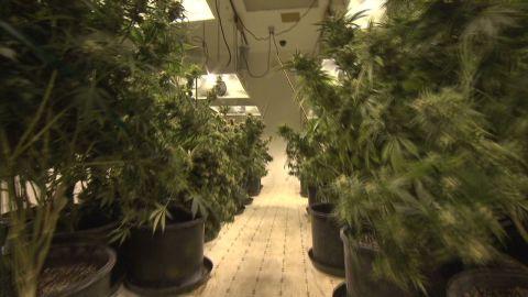 pkg spellman marijuana delivery service_00013618.jpg