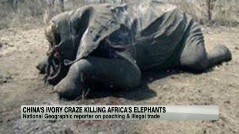 exp china.ivory.african.elephtants.amanpour_00014202.jpg
