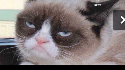 tsr moos grumpy cat gtes movie deal_00005103.jpg