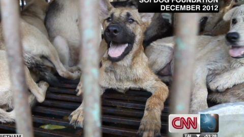 coren.dog.smuggling_00013002.jpg