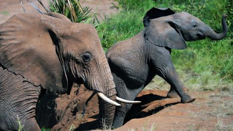 2. Illegal animal trade, 13,276 votes. Illicit trade in animal parts lines pockets and empties ecosystems.
