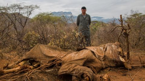 A man looks at the carcass of an elephant killed for its tusks in Kenya.