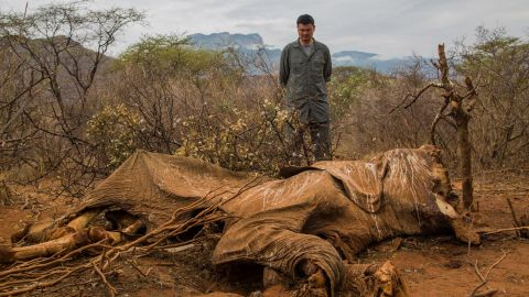 """""""You can't really be prepared. What actually throws you off, what everyone forgets to mention, is the smell,"""" says Ladkani.  """"It gets in your clothes. It stays with you for two weeks, you can't get rid of it."""" Pictured: Wild Aid Ambassador Yao Ming looks at the carcass of an elephant in Samburu, Kenya in  August 2012."""