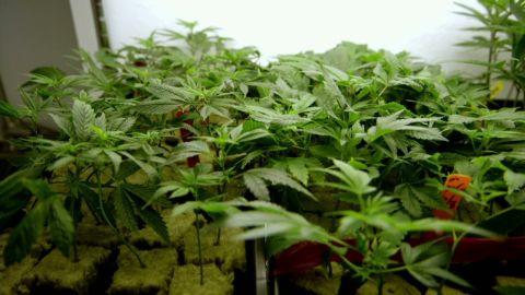 vo inside man spurlock harborside marijuana promo_00002629.jpg
