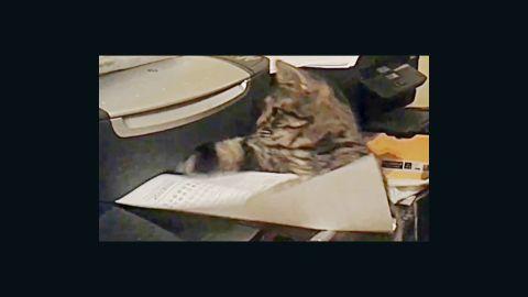 Distraction: Cat vs. printing paper