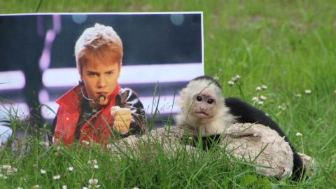 """Justin Bieber's capuchin monkey -- confiscated by German officials -- is out of quarantine and about to join a new """"family"""" at Serengeti Park in Hodenhagen, near Hanover in northern Germany."""