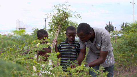 going green haiti mringa tree_00010701.jpg