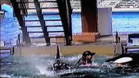 cnnfilms.blackfish.promo.video_00004015.jpg