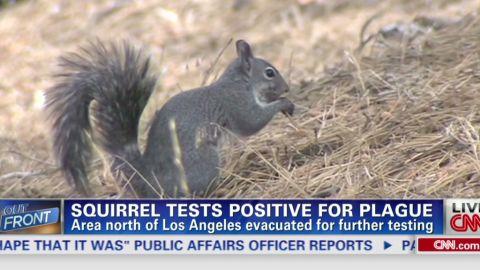erin intv squirrel tests positive for plague_00002404.jpg
