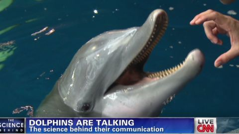 meyers dolphins talking_00003822.jpg