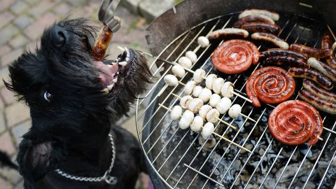 Aside from the obvious danger of serious burns, cookouts can be treacherous for your dog. Eating foods they don't normally eat -- greasy burgers and barbecue sauce -- can wreak havoc on their digestive systems.