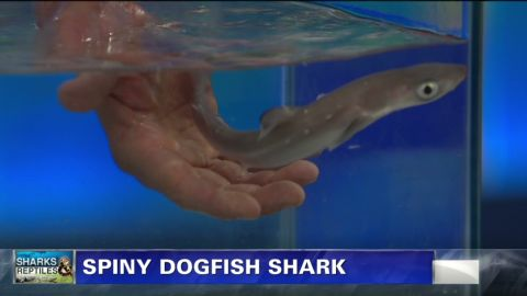 exp pmt jeff corwin shark_00001030.jpg