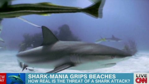 exp newday berman shark sightings_00003904.jpg