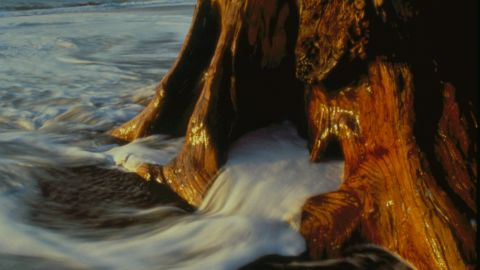 Olympic National Park in Washington state dropped one spot to sixth place last year.