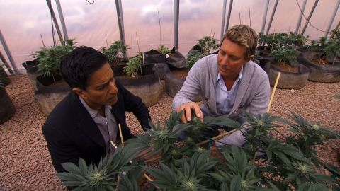 """The brothers started the <a href=""""http://realmofcaring.com/"""" target=""""_blank"""" target=""""_blank"""">Realm of Caring Foundation</a>, a nonprofit organization that provides cannabis to adults and children suffering from a host of diseases. Here Josh Stanley, right, gives CNN's Dr. Sanjay Gupta a tour.<br />"""