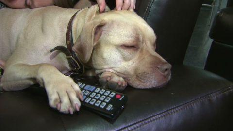 pkg moos dog tv_00001107.jpg