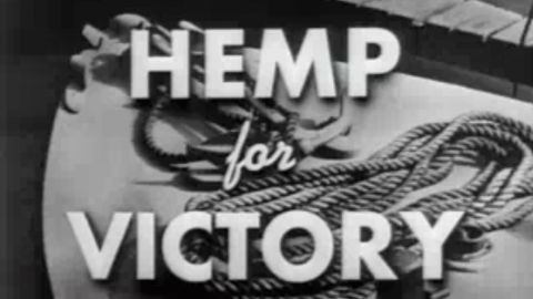 """Even after Congress cracked down on marijuana in 1937, farmers were encouraged to grow the crop for rope, sails and parachutes during World War II. The """"Hemp for Victory"""" film was released in 1942 by the U.S. Department of Agriculture."""
