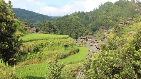 Like most of southern China, rice is a staple crop. Grown on terraced paddy fields that surround Dali, three mu, equivalent to about half an acre, can feed a household.