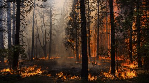 The Rim Fire burns just outside Yosemite on August 24. A top priority is stopping the fire from spreading further into the national park.
