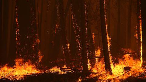 Fierce flames from the Rim Fire burn near Groveland, not far from Yosemite National Park.