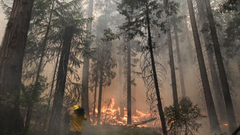 A videographer records the flames burning through trees as the Rim Fire menaces Yosemite National Park on August 27.