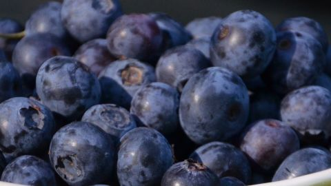 Blueberries have been linked to a host of health benefits, including lowering blood pressure. What's more, researchers at Tufts University say, blueberries improve your memory.