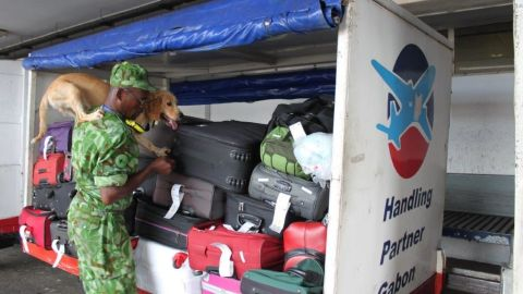 Along with their handlers, they frequently search luggage at the international airport ...