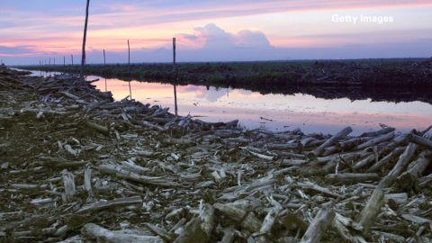 bts orig eitm deforestation cousteau_00005808.jpg