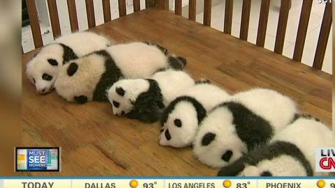 newday baby pandas_00003502.jpg